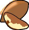 brazilnut.png