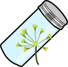 dill_seeds.png