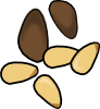 pine_nuts.png