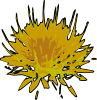 safflower_seeds.png