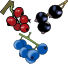 Boysenberries (bayas de Boysen), en lata, en alm�bar espeso
