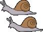 Mollusks, snail, raw